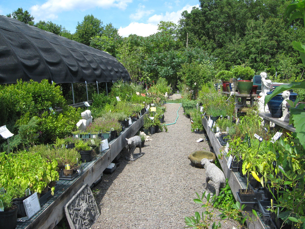 Green Witch Herbs Was Created As A Complementary Extension Of Catskill Native Nursery Here You Will Find Large Selection Culinary Fragrant And